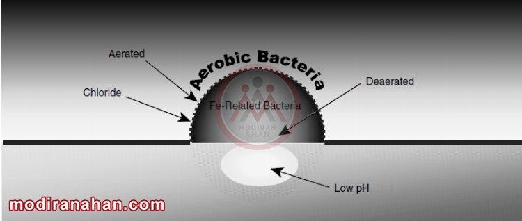 باکتری های مرتبط با آهن که مقدار متفاوتی PH و اکسیژن در سطح فلز ایجاد می کنند