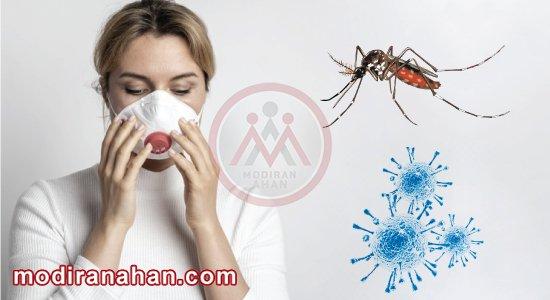 ویروس کرونا از طریق پشه ها منتقل نمیشود